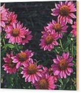 Purple Pow Echinacea  Wood Print