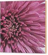 Purple Pow Wood Print