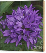 Purple Pride Wood Print