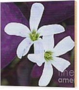 Purple Queen Flowers Wood Print by Sabrina L Ryan