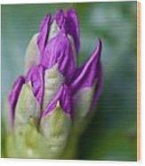 Purple Rhode Wood Print
