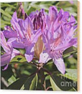 Purple Rhododendron Wood Print