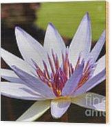 Purple Rhonda Kay Waterlily Above The Pond Wood Print