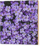 Purple Rockcress Wood Print