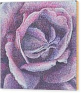 Purple Rose 2-14 Wood Print