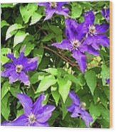 Purple Rush Wood Print