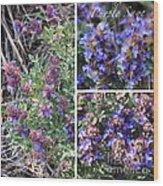 Purple Sage Collage Wood Print
