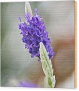Purple Sage Wood Print