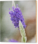 Purple Sage Texture Wood Print
