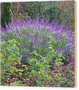 Purple Salvia In The Garden Wood Print