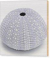 Purple Sea Urchin White Wood Print