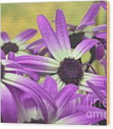 Purple Senetti IIi Wood Print by Cate Schafer