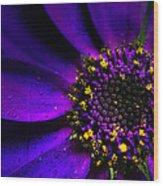 Purple Senetti In Macro Wood Print by Rosanna Zavanaiu