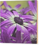 Purple Senetti Iv Wood Print by Cate Schafer