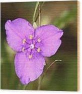 Purple Spiderwort Wildflower Wood Print