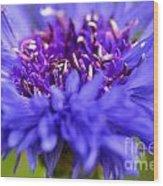Purple Spike Wood Print