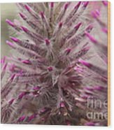 Purple Spike Wood Print
