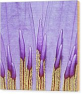 Purple Spires Wood Print