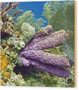 Purple Sponge Wood Print