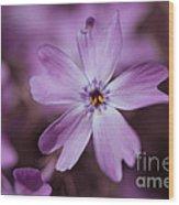 Purple Star Wood Print