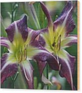 Purple Stargazers Wood Print