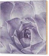 Purple Succulent Wood Print