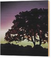 Purple Sunset Green Flash And Oak Tree Silhouette Wood Print
