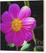 Purple Dahlia Wood Print