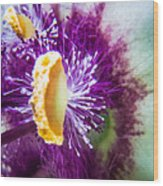 Purple Surprise Wood Print