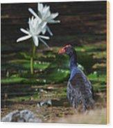 Purple Swamphen Admiring The Water Lilies Wood Print