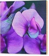 Purple Sweet Peas Wood Print