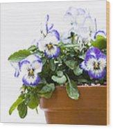 Purple Swirl Violas Wood Print