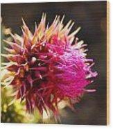 Purple Thistle Wood Print
