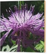 Purple Thistle Wood Print