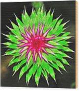 Purple Thistle Flower Wood Print