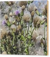 Purple Thistle Wood Print by Gerald Murray Photography