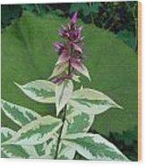 Purple Tipped Flower Wood Print