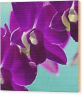 Purple Trio - Orchids Wood Print