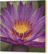 Purple Tropical Water Lily Wood Print