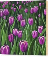 Purple Tulip Field Wood Print