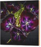 Purple Tulips 2 Wood Print