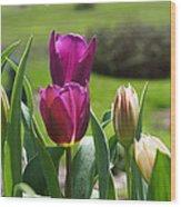 Purple Tulips Garden Art Print Tulip Flowers Wood Print