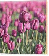 Purple Tulip Standouts Wood Print