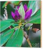 Purple Turtle Head Flower Wood Print