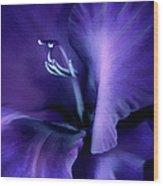 Purple Velvet Gladiolus Flower Wood Print by Jennie Marie Schell
