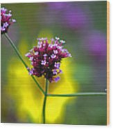 Purple Verbena Flowers Wood Print