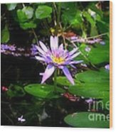 Purple Water Lilly Wood Print