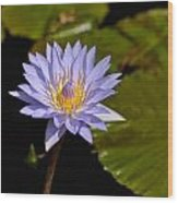 Purple Water Lily 2 Wood Print