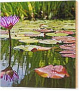 Purple Water Lily Flower In Lily Pond Wood Print