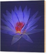 Purple Water Lily Wood Print